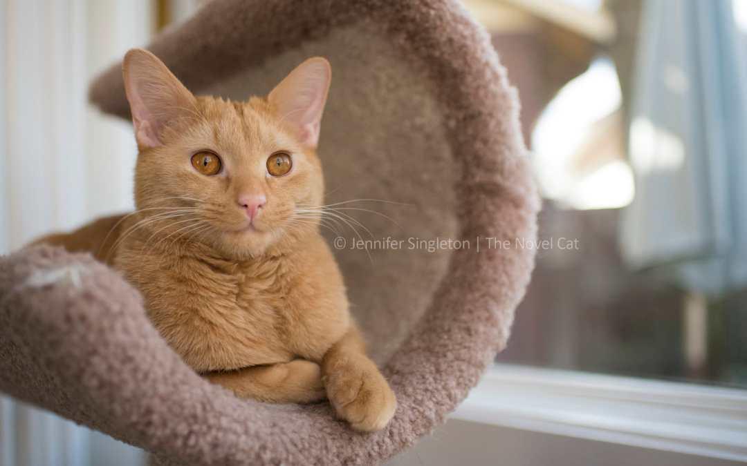 Kitten update