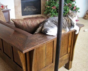 cat on arm of stickley settle