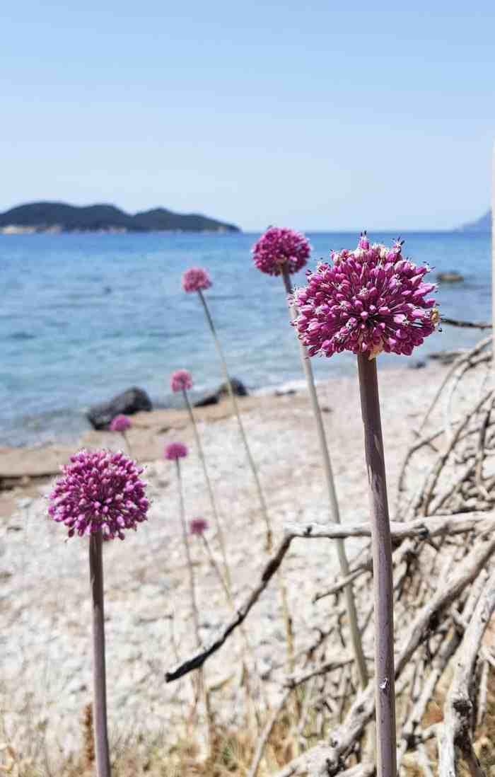 Best beaches of Zakynthos, secret beaches of Zakynthos: Daphne beach