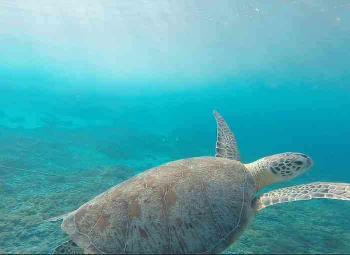 Where to see turtles in Zakynthos