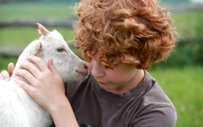 Child Friendly Livestock