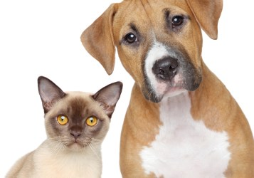 Pet Food Alternatives for Long-Term Emergencies