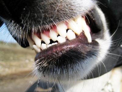 Dog Bites: A SHTF Medical Emergency You Haven't Considered