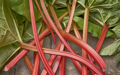 Rhubarb: The Good Stalk
