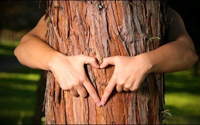 "Why Being a ""Tree Hugger"" Builds Self-Reliance"