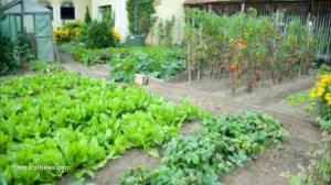 Herb-Garden-Backyard-Healthy-Food