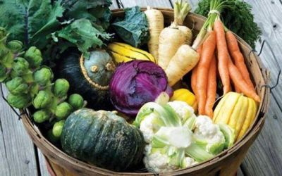 10 Great Vegetables for Fall Gardening