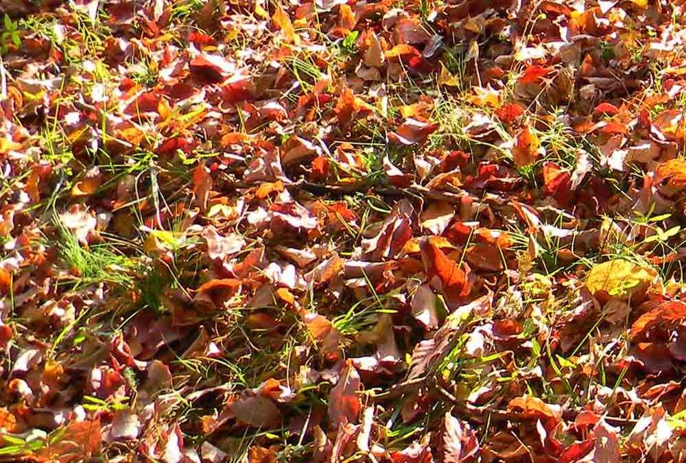 Gardening Tasks for Fall
