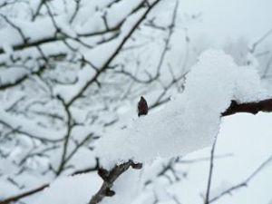 Snow_branch_ice