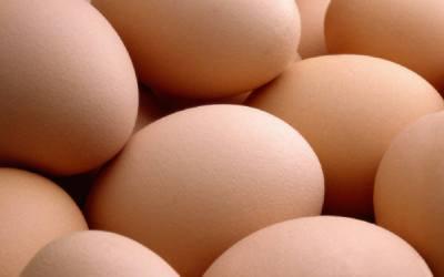 Turning Kitchen Scraps into Free Eggs