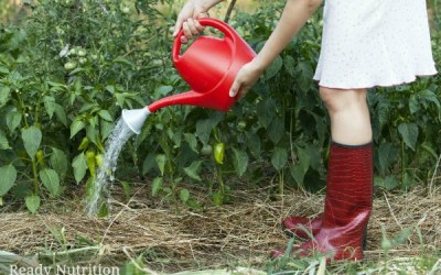 7 Laws of Gardening: Time-Tested Tips For Growing a Successful Garden