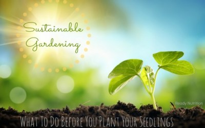 Sustainable Gardening: What To Do Before You Plant Your Seedlings