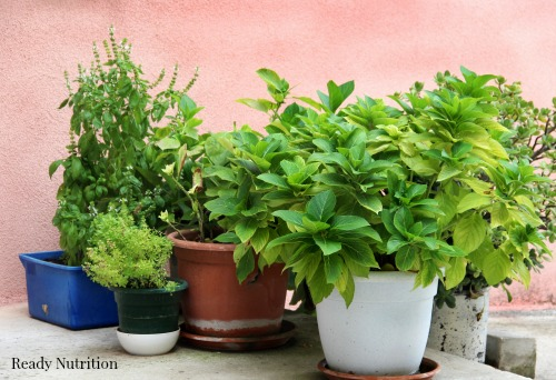 Mix of herbs on terrace in the pot