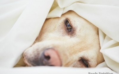 Study: Contagious Norovirus Spreads From Dog To Owner
