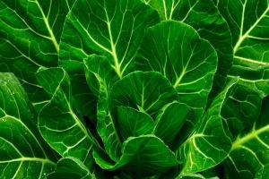 leafy greens RN