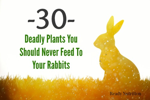 deadly rabbit food