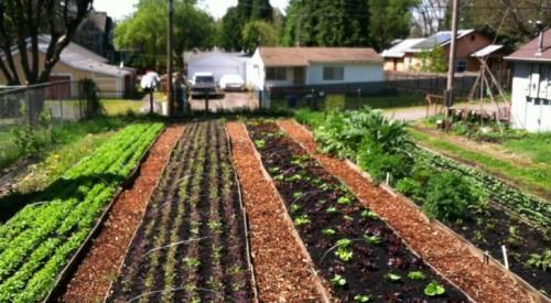 8 Reasons to Become a Yardfarmer