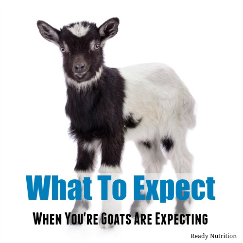 What to Expect When You're Goats Are Expecting