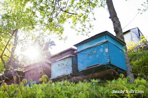 Winter Beekeeping Maintenance for a Healthy Hive