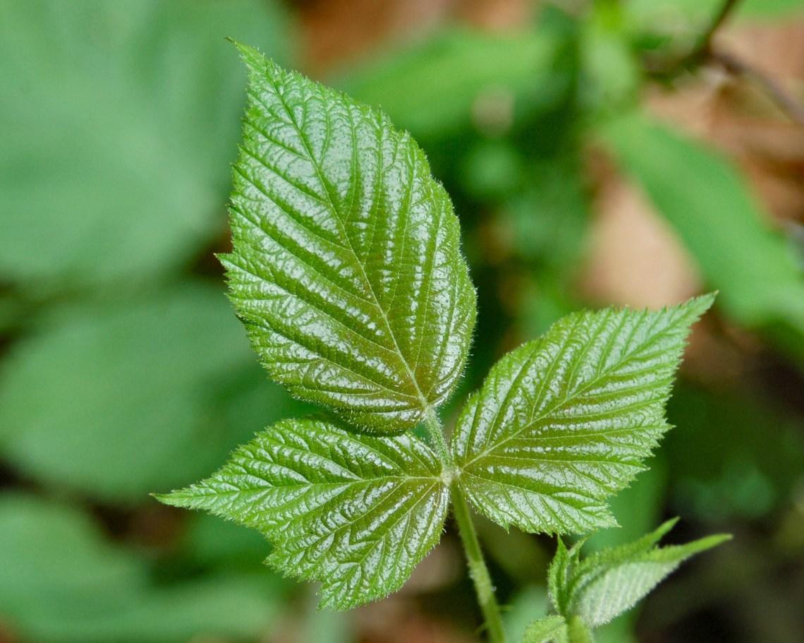 Image Result For Tea Tree Oil Vs Tea Tree Essential Oil