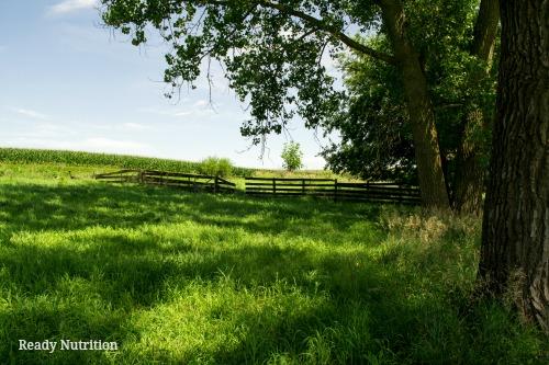 homestead protection