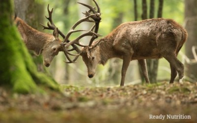 Prepper Sustainability: How to Observe and Monitor Local Game