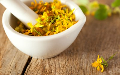 How to Harvest St. John's Wort for Medicinal Tinctures