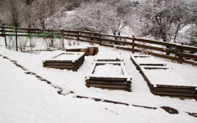 4 Big Ways Snow Can Benefit the Garden