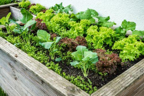 10 Cool Season Plants You Can Grow Today!