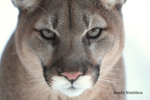 When Survival is at Stake, Your Animalistic Instincts Could Save Your Life