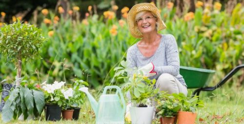 5 Must-Have Garden Tools For the Lazy Gardener
