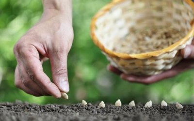4 Reasons To Choose Heirloom Seeds For Your Garden