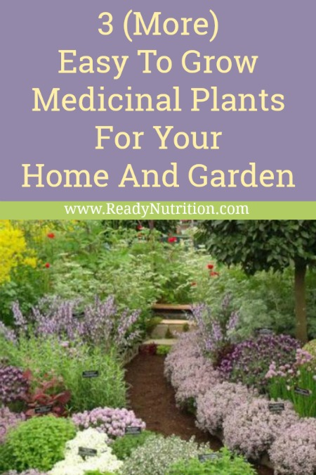 These 3 medicinal herbs are easy to grow and adaptable in most climates. Best of all, they come back each year!