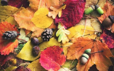 Reduce Waste: How To Make The Most Of Your Autumn Leaves