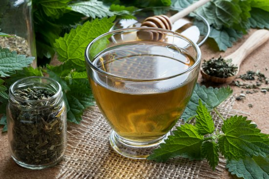 Nettles have a plethora of medicinal uses. Learn all about the healthy benefits of nettles here.