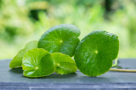 Boost Your Brain-Power With These Herbal Foods