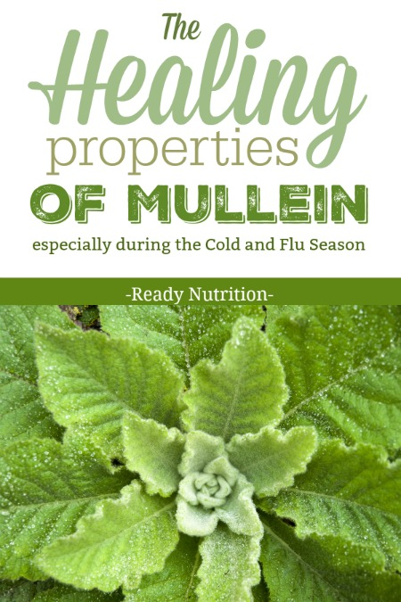 You can find mullein in leaf, tincture, pill, or capsule form, but this information is given to you in the hopes that you'll go out next season and find it to make your supplies with as well.