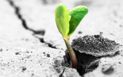 Resilience: What It Is, Why It Is Important, and How To Stay Mentally Strong