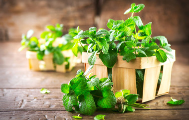Why You Should Consider Growing Peppermint This Summer