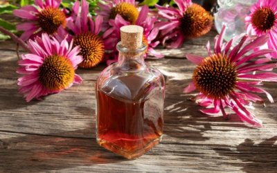 How To Make An Echinacea Tincture