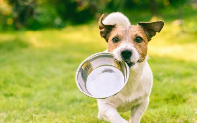 When the Dog Food Runs Out, This is What To Feed Your Pet