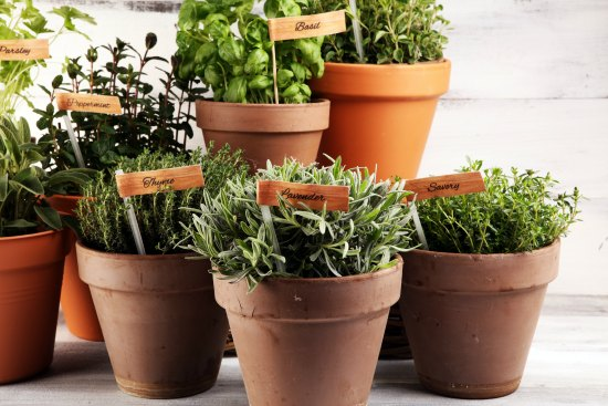 How Planting Herbs Compliments Sustainable Gardening