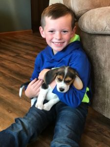 Beagle with a boy