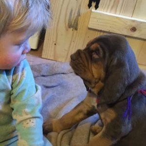Bloodhound with child