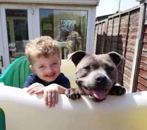 Staffordshire Bull Terrier with boy