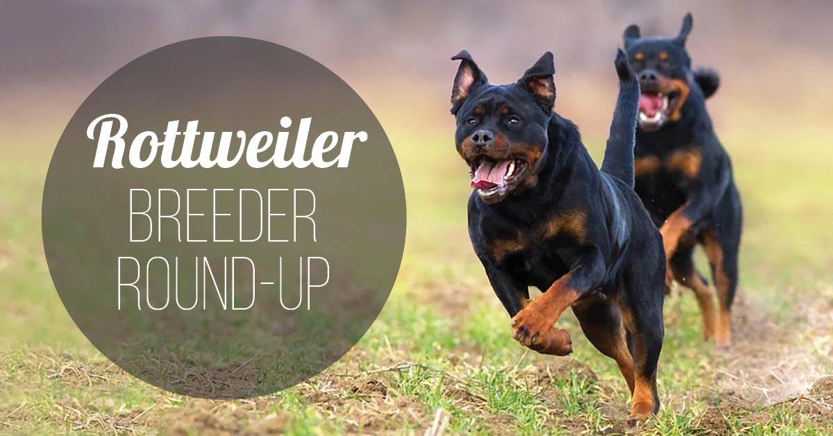 Rottweiler Breeder Round-Up