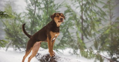 A Dog's Way Home Film Review