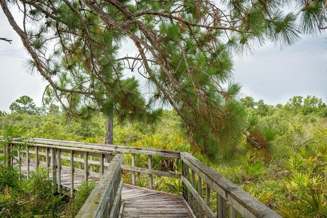 Conservancy of Southwest Florida in Naples, FL