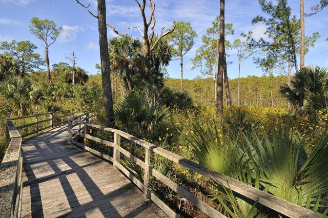 Naples Corkscrew Swamp Sanctuary
