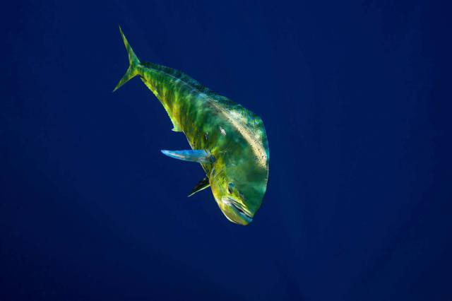 Deep sea fishing in Naples, Florida